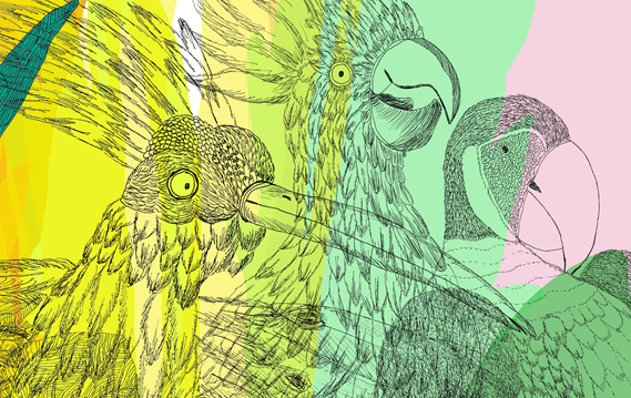 Birds and Monkeys